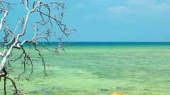 Dead Tree Branch Hangs over Rocky Tropical Beach. Video UltraHD Stock Footage
