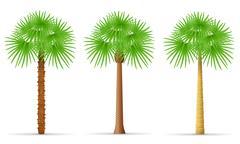 palm tree illustration - stock illustration