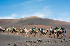 camelcade on Lanzarote - stock photo