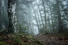 Landscape of misty wood in mountains Stock Photos