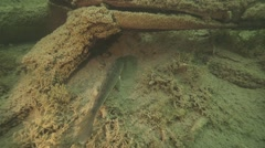 Predatory fish swims along the bottom of lake Stock Footage