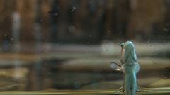 Little catfish sucker on the aquarium wall, task focus - stock footage