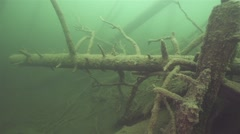 Sunken trees in rusty color at the bottom of lake Stock Footage
