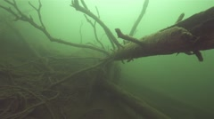 dead tree at the bottom of lake - stock footage