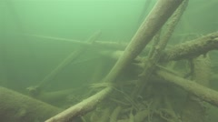 Fish between sunken trees at the bottom of lake Stock Footage