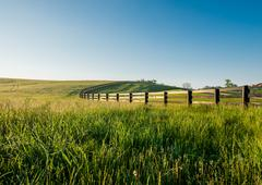 Tall Dewy Grass in Rolling Hills of Kentucky - stock photo