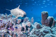 Dolphin underwater on reef background looking at you Stock Photos