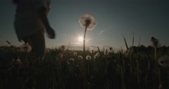 Silhouette of a beautiful young woman ran in the Dandelion field at sunset, slow Stock Footage