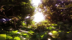 Slow Motion Sun Shining Through Rainforest. Lens Flare Arkistovideo