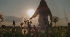 silhouette of a beautiful young woman ran in the Dandelion field at sunset, slow - stock footage