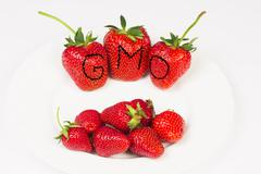 GMO huge strawberries - stock photo