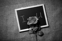 Monochrome photo of declaration of love on blackboard with rose Stock Photos