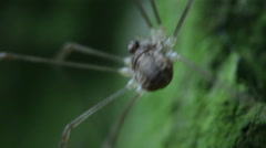 Spider macro close up Stock Footage