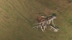 Aerial Shot of Grazing Sheep Stock Footage