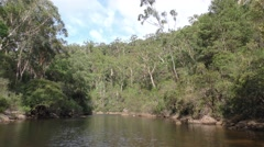Georges River and Eucalyptus Forest in Australia Stock Footage