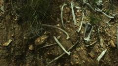 dried animal bones in dirt - stock footage