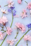 Beautiful, romantic background with pink cherry blossom and bluebells Stock Photos