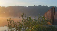 Sunrise thru the reeds Stock Footage
