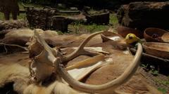 Native Americans - Deer skull & Food Stock Footage