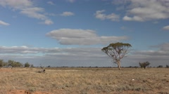 Lone Tree in Australia Outback Desert Under Blue Sky and Clouds Stock Footage