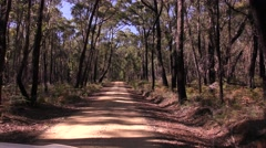 Forest Road Through Eucalyptus Woodland and Trees in Australia Stock Footage