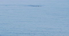 4K Lone swimmer in the peaceful waters of the mediterranean sea.  - stock footage