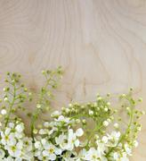 White bird-cherry flowers on wooden background. - stock photo