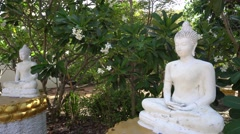 White sitting Buddha - stock footage