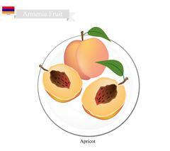 Fresh Apricot, A Popular Fruit in Armenia Stock Illustration