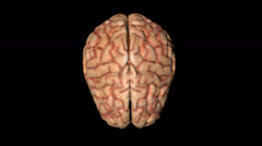 Human brain in rotation seen from above - stock footage