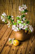 Ripe apple and blossoming branch of an apple-tree in a clay jar, close-up Stock Photos