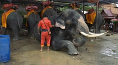 man washing an elephant in royal park of Ayutthaya - stock footage