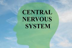 Central Nervous System brain concept Stock Illustration