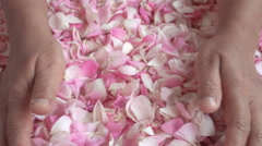 Tea rose petals collected by woman hands. Petals fall down through finges. Stock Footage