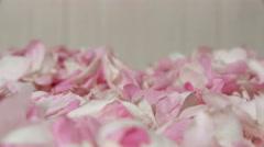Tea rose petals fall down. Closeup. Stock Footage