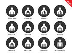Human Anatomy and Body Systems vector icons set - stock illustration
