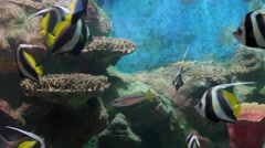 tropical fish and corals underwater - stock footage