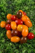 Selection grade. Small varieties tomatoes on green grass - stock photo