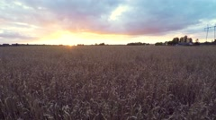 Beautiful sunset at fields. Low altitude flight. Aerial footage. - stock footage
