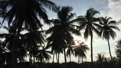 Palmtrees during sunset in Arugam Bay Stock Footage