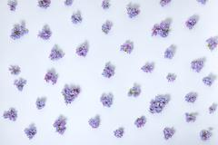 Top view of trendy abstract beautiful lilac flowers floral pattern, flat lay, Stock Photos