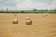 Agricultural field with bales Stock Photos