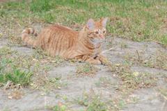 Domestic cat feeling wild Stock Photos