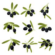 Organically grown black olive fruits on branches Stock Illustration