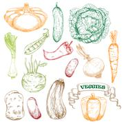 Colored sketched vegetables for agriculture design Stock Illustration