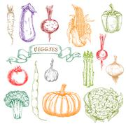 Sketches of fresh picked ripe vegetables - stock illustration