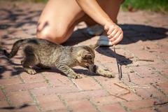 little girl playing with kitten outdoor - stock photo