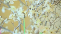 Flowering tree with hanging decorations hearts. Close up Stock Footage
