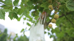 White wedding dress hangs on clothes for hanger on the chestnut. Close up - stock footage