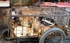 Dogs in cage awaiting slaughter on Tomohon Traditional Market - stock photo